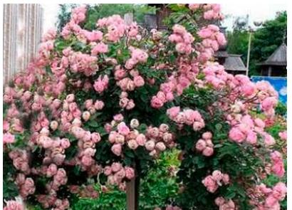 Романтическая обстановка в саду
